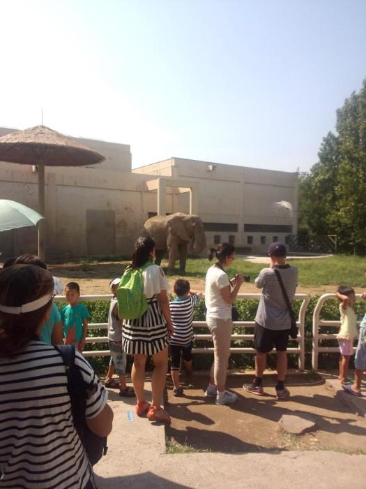 味道很重的大象