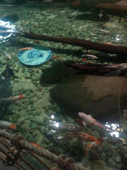 鱼池里有大盘子