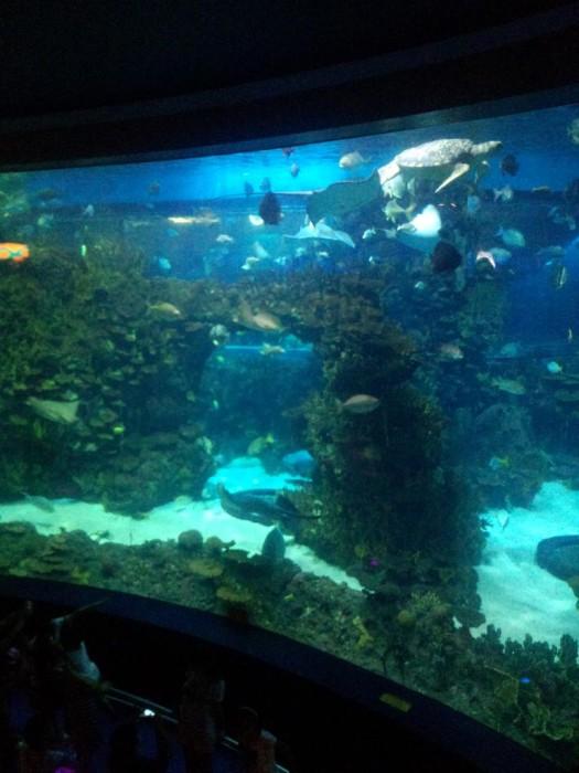 这才是水族馆的感觉